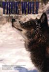 True Wolf poster
